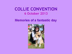 Collie Convention 2013