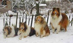 Jodie, Sunny, Sally and Rusty
