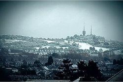 Rowley in the snow