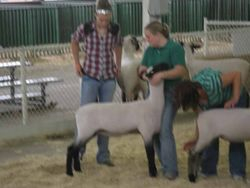 Showing at the Iowa State Fair