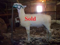 He is SOLD!!!