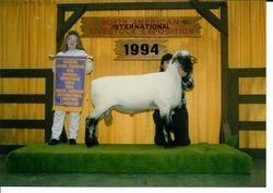 1994 Reserve Champion