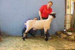2014 fall ewe lamb Rueber Whte 8
