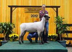 Gazelle, 2nd place yearling in late class at NAILE
