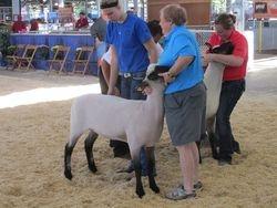2nd place fall ewe lamb
