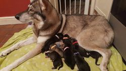 Lola and her 10 puppies