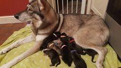 Lola & her puppies