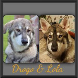 Lola and her brother Drogo