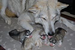 Luna and her 4 babies not long after birth