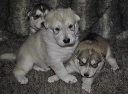 All 3 pups
