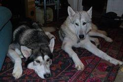 Luna and Tamaska