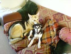 Matsi at 13 weeks old with Tala