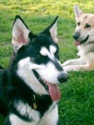 Matsi and Kodi