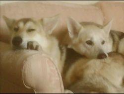 Tala & Ozzy