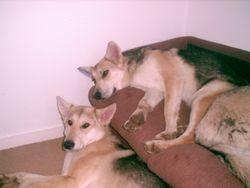 Kodi & Tala