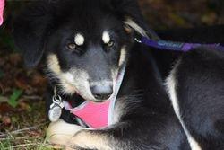 Shima Onida Persephone (Lilith)  Timber Dog