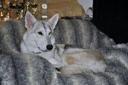 Luna - 2015  Northern Inuit