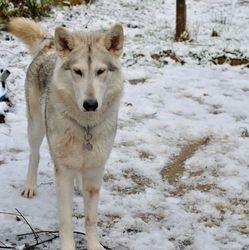 Luna in the snow - 2014