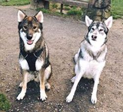 Timba & River (Inuit)