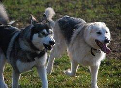 Tamaska and Ozzy