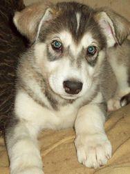 Tamaska at 7 weeks old