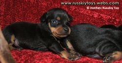 Puppies 2 weeks old
