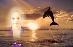 Sara's Dolphin