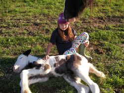 Tess nuzzling Althea w/drum filly Amy