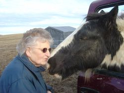 Drum Stallion Joey Kissing our Neighbor Delores