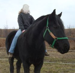 Percheron Rick and experienced rider
