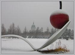The winter cherry
