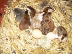 Newly Hatched