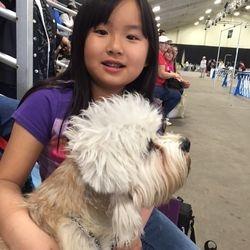 Dandie Denmont Terrier