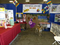 Korean Jindo