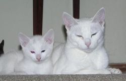 Ch Catwo Biaty Pantera and her white son