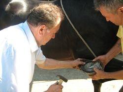 Kovac - potkivanje konja
