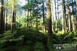 Primeval Forests