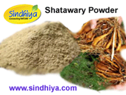 Shatawary Powder