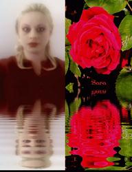 Sara's Single Rose.