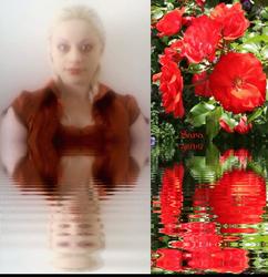 Sara's Roses
