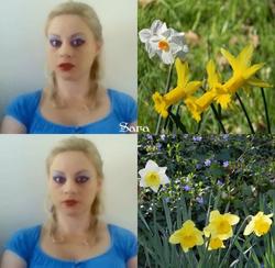Sara's Flashy Daffodils
