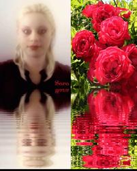 Sara Likes Roses.