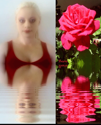 Sara and the Blooming Rose.