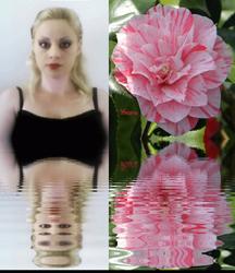 Sara's Dreamy Bloom