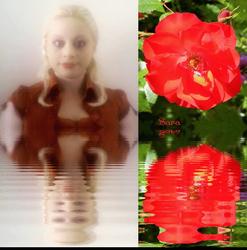 Sara's Red Rose