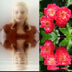 Sara's Cute Roses