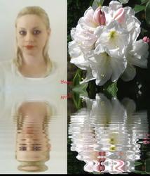 Sara's Flower Heaven