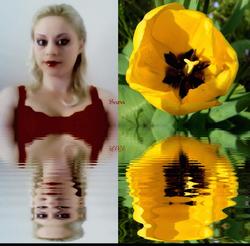 Sara's Sunny Tulip