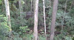 BSBCC's Jungle Trail