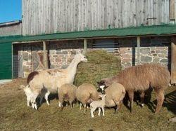 enjoying the hay